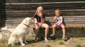 Ευτυχισμένη ζωή των κατοικίδιων ζώων αστείο βίντεο - όμορφα χρυσά retriever και παιδιά που τρώνε το παγωτό στον κήπο - φορητό φιλμ μικρού μήκους