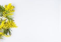 Ευχετήρια κάρτα εορτασμού ημέρας γυναικών, mimosa σε ένα άσπρο υπόβαθρο Στοκ εικόνα με δικαίωμα ελεύθερης χρήσης