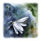 Ευχετήρια κάρτα με τα λουλούδια στη χλόη Ανασκόπηση με ένα λουλούδι στοκ εικόνα