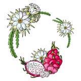 Ευχετήρια κάρτα με το ρόδινο pitaya Θερινή τροπική απεικόνιση Τρόφιμα για τον υγιή τρόπο ζωής Κόκκινα ολόκληρα φρούτα δράκων απεικόνιση αποθεμάτων