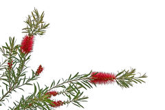 Ευχετήριες κάρτες με τα λουλούδια σε ένα άσπρο υπόβαθρο Στοκ εικόνες με δικαίωμα ελεύθερης χρήσης