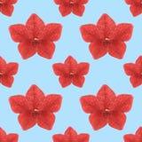 Ευώδης καπνός Άνευ ραφής σύσταση σχεδίων των λουλουδιών Floral BA διανυσματική απεικόνιση