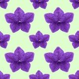 Ευώδης καπνός Άνευ ραφής σύσταση σχεδίων των λουλουδιών Floral BA Στοκ Εικόνες
