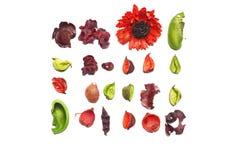 Ευώδη ξηρά λουλούδια Στοκ εικόνα με δικαίωμα ελεύθερης χρήσης