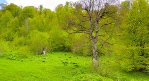 Ευδαιμονία φύσης ` s Στοκ εικόνα με δικαίωμα ελεύθερης χρήσης