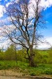 Ευδαιμονία φύσης ` s Στοκ φωτογραφίες με δικαίωμα ελεύθερης χρήσης