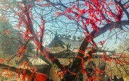 Ευλογία του δέντρου Στοκ Εικόνες