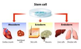 Εφαρμογή βλαστικών κυττάρων διανυσματική απεικόνιση