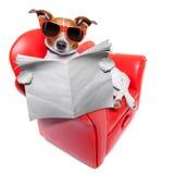 Εφημερίδα σκυλιών Στοκ εικόνες με δικαίωμα ελεύθερης χρήσης