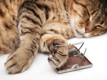 Εφιάλτης ποντικιών Στοκ Φωτογραφίες