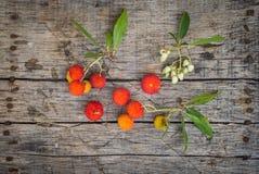 Εύγευστα φρέσκα φρούτα arbutus Στοκ φωτογραφίες με δικαίωμα ελεύθερης χρήσης