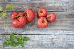 Εύγευστες οργανικές κόκκινες ντομάτες Ντομάτες και βασιλικός παλαιό σε ξύλινο Στοκ φωτογραφία με δικαίωμα ελεύθερης χρήσης
