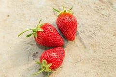 Εύγευστες ώριμες φράουλες στοκ εικόνες με δικαίωμα ελεύθερης χρήσης