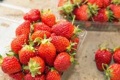 Εύγευστες ώριμες φράουλες στοκ φωτογραφίες με δικαίωμα ελεύθερης χρήσης