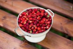 εύγευστη φράουλα μούρα ώριμα Συλλέγουμε τις φράουλες Στοκ Φωτογραφίες