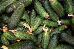 Εύγευστος βαθύς - τα πράσινα αγγούρια φαίνονται νόστιμα Στοκ εικόνα με δικαίωμα ελεύθερης χρήσης