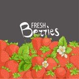 Εύθραυστες και juicy φράουλες απεικόνιση αποθεμάτων