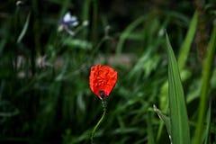 Εύθραυστος beaty ευχαρίστηση κήπων στοκ εικόνες με δικαίωμα ελεύθερης χρήσης