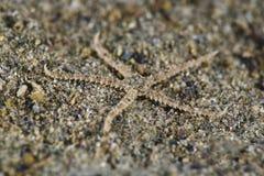 εύθραυστο αστέρι Στοκ φωτογραφίες με δικαίωμα ελεύθερης χρήσης