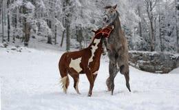 Εύθυμα άλογα Στοκ εικόνες με δικαίωμα ελεύθερης χρήσης