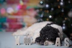 εύθυμα Χριστούγεννα στοκ φωτογραφία
