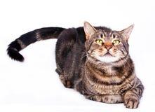 Εύθυμη γάτα στοκ εικόνα με δικαίωμα ελεύθερης χρήσης