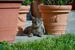 Εύθυμη εσωτερική γάτα που βρίσκεται στον ξύλινο πάγκο με τα καμμμένα πόδια Πυροβοληθείς στο backlight στο ηλιοβασίλεμα Πολύ ρηχό  στοκ εικόνα με δικαίωμα ελεύθερης χρήσης