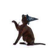Εύθυμη μαύρη γάτα με το καπέλο για αποκριές Απομονωμένος στο λευκό Στοκ εικόνα με δικαίωμα ελεύθερης χρήσης