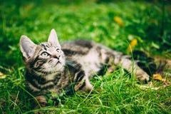 Εύθυμη χαριτωμένη τιγρέ γκρίζα συνεδρίαση Pussycat γατακιών γατών στη χλόη έξω Στοκ Εικόνες
