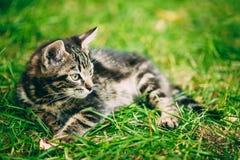 Εύθυμη χαριτωμένη τιγρέ γκρίζα συνεδρίαση Pussycat γατακιών γατών στη χλόη υπαίθρια Στοκ Εικόνες
