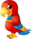 Εύθυμος κόκκινος παπαγάλος Στοκ εικόνα με δικαίωμα ελεύθερης χρήσης