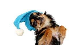 Εύθυμος χαριτωμένος λίγο κουτάβι chihuahua στο μπλε καπέλο Χριστουγέννων Στοκ φωτογραφία με δικαίωμα ελεύθερης χρήσης