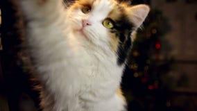 Εύθυμο αστείο γατάκι που απομονώνεται στο άσπρο υπόβαθρο φιλμ μικρού μήκους