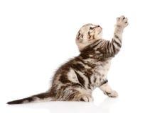 Εύθυμο γατάκι μωρών η ανασκόπηση απομόνωσε το λευκό Στοκ φωτογραφίες με δικαίωμα ελεύθερης χρήσης