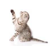 Εύθυμο γατάκι μωρών η ανασκόπηση απομόνωσε το λευκό Στοκ φωτογραφία με δικαίωμα ελεύθερης χρήσης