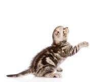 Εύθυμο γατάκι μωρών στο σχεδιάγραμμα Στην άσπρη ανασκόπηση Στοκ φωτογραφία με δικαίωμα ελεύθερης χρήσης