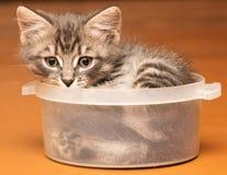 Εύθυμο γατάκι που χαλούν στο σπίτι Στοκ Εικόνα