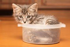 Εύθυμο γατάκι που χαλούν στο σπίτι Στοκ φωτογραφία με δικαίωμα ελεύθερης χρήσης