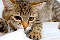 Εύθυμο γατάκι. Στοκ Φωτογραφία