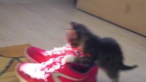 Εύθυμο γκρίζο τιγρέ γατάκι απόθεμα βίντεο