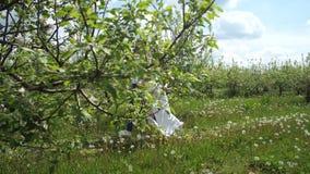 Εύθυμο ζεύγος που τρέχει μεταξύ των ανθίζοντας δέντρων φιλμ μικρού μήκους