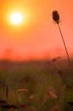 Εύθυμο πρωί φθινοπώρου Στοκ φωτογραφίες με δικαίωμα ελεύθερης χρήσης