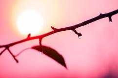 Εύθυμο πρωί φθινοπώρου Στοκ φωτογραφία με δικαίωμα ελεύθερης χρήσης