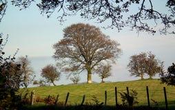 εύκολος επιμεληθείτε την εικόνα στο διανυσματικό χειμώνα δέντρων Στοκ εικόνες με δικαίωμα ελεύθερης χρήσης