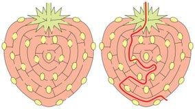 Εύκολος λαβύρινθος φραουλών Στοκ εικόνα με δικαίωμα ελεύθερης χρήσης