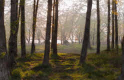 Εύκολη ομίχλη φθινοπώρου Στοκ Φωτογραφίες