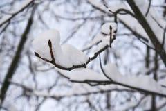 εύκολος επιμεληθείτε την εικόνα στο διανυσματικό χειμώνα δέντρων Στοκ φωτογραφίες με δικαίωμα ελεύθερης χρήσης