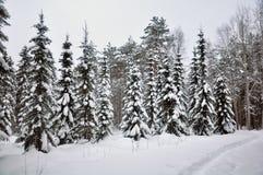 εύκολος επιμεληθείτε την εικόνα στο διανυσματικό χειμώνα δέντρων Στοκ εικόνα με δικαίωμα ελεύθερης χρήσης