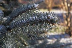 εύκολος επιμεληθείτε την εικόνα στο διανυσματικό χειμώνα δέντρων Στοκ Φωτογραφία