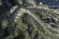 εύκολος επιμεληθείτε την εικόνα στο διανυσματικό χειμώνα δέντρων Στοκ Φωτογραφίες